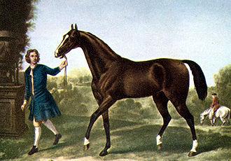safanad ló