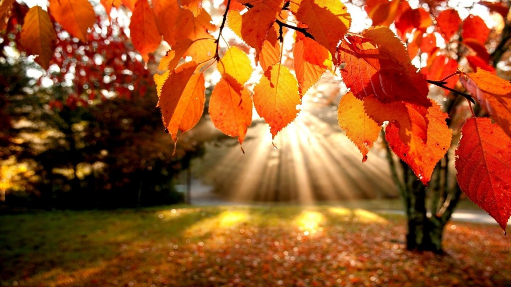 tumblr_static_autumn-leaves-wallpaper