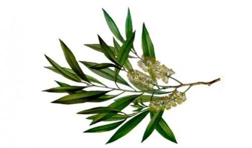 teafa parfümblog