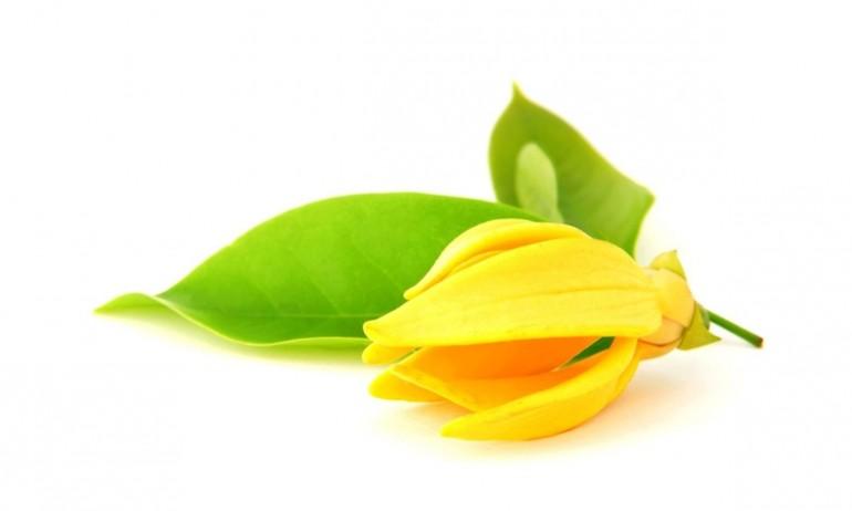 ylang-ylang parfümblog