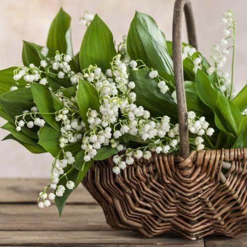 10 gyöngyvirág illatú parfüm, amelyet érdemes kipróbálnod!